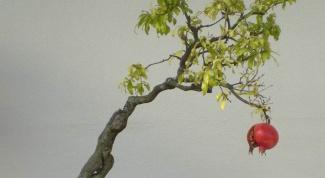 Как вырастить миниатюру дерева