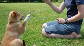 Что нужно, чтобы завести собаку