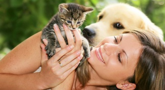urinary tract infection in cats remedies