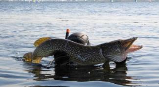 Что такое профессиональная рыбалка