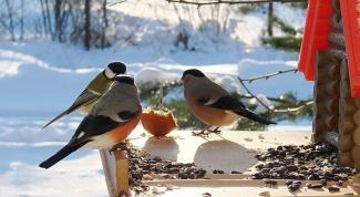 Как помочь птицам перезимовать