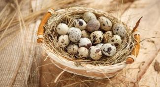 Какие блюда можно приготовить из перепелиных яиц