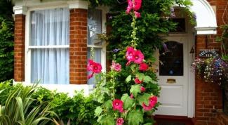 Как посадить палисадник