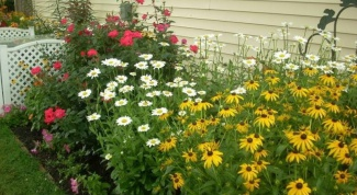 Какие функции выполняет цветник перед домом