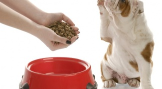 How to transfer the dog to a different food