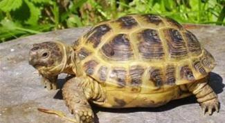 Как поить черепах