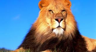 Что является символическим изображением храбрости
