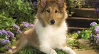 Как передается демодекоз у собак
