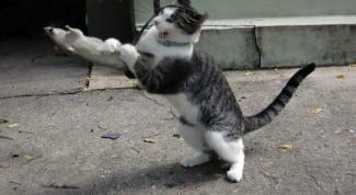 Поведение кошки и внешние факторы