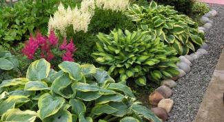Популярные декоративные многолетники для сада