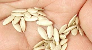 Как замачивать обработанные семена