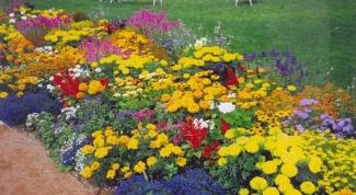 Как создать цветник
