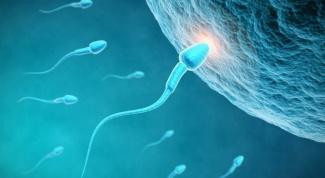 Как происходит оплодотворение яйцеклетки