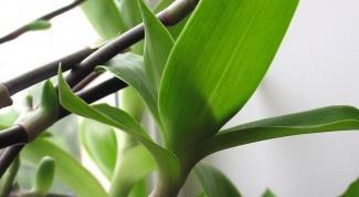 Какая трава полезна для поджелудочной железы