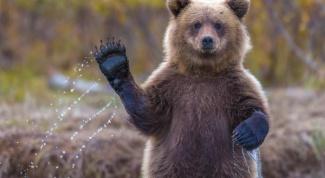 Какой дом у медведя