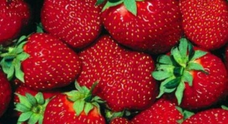 What strawberries bear fruit all year