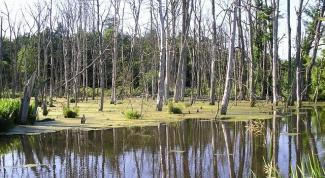 Как ходить по болоту