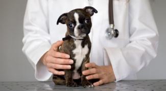 Что значит чипирование собак