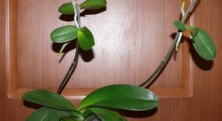 Как ухаживать за орхидеей, если она отцвела