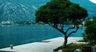 Как самостоятельно отдыхать в Черногории