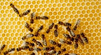 Содержание пчел в ульях-лежаках