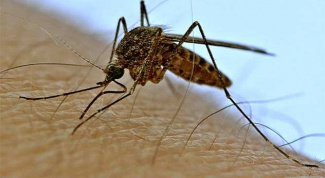 What to do to a mosquito bite has stopped itching