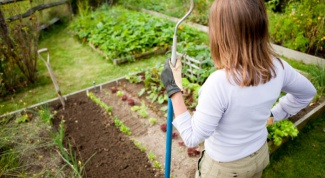 How to care for the garden