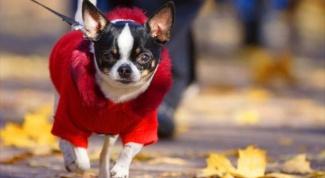 Нужна ли домашним животным одежда
