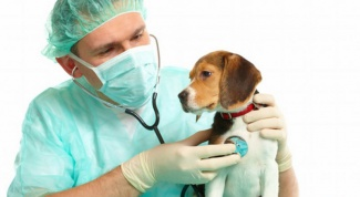 How is distemper in dogs