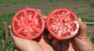 Какие хорошие семена томатов