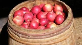 Заготовки на зиму: моченые яблоки с мятой