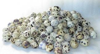 Перепелиные яйца, сколько в день употреблять перепелиных и куриных яиц