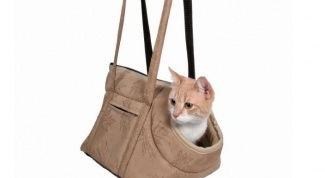 How to choose a pet carrier for cats