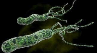 How is Helicobacter