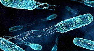 How is Enterococcus