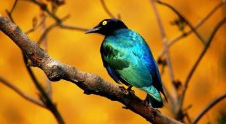 Как передвигаются птицы