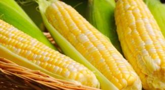 Можно ли кормящей маме есть кукурузу
