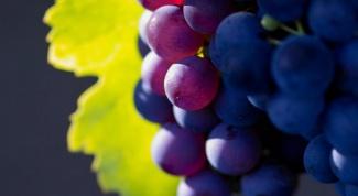 Как бороться с осами на винограднике