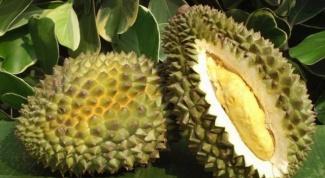 Что за фрукт - дуриан?