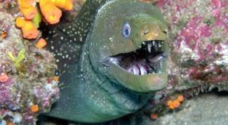 Виды и разнообразие хищных рыб
