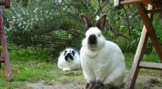 Как разводить кроликов в ямах