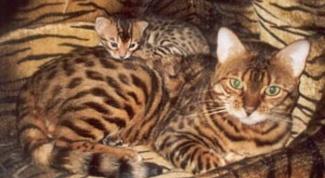 Насколько выгоден бизнес по разведению породистых животных