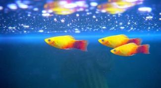 Что нужно для рыбок гуппи