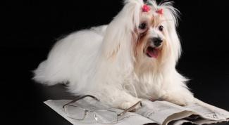 Правда ли, что собаки различают цвета