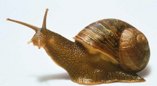 How is the treatment snails