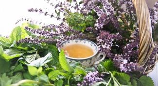 Травы помогут от головной боли: ромашка, мята, лечебный сбор