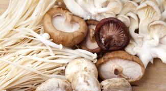 Какие грибы чаще всего используются в кулинарии