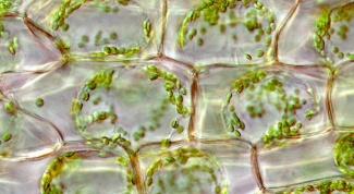 Различие и сходство прокариот и эукариот