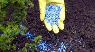 Чем лучше удобрять почву: навозом или химическими удобрениями
