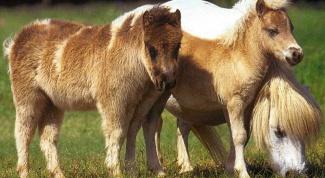 Чем кормить пони